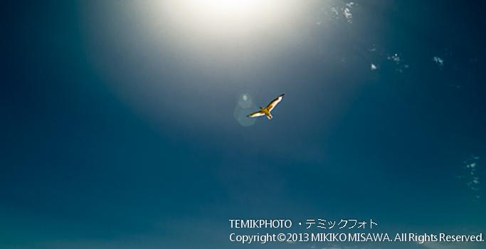 海鳥 (アンダルシア地方・カディス)  62