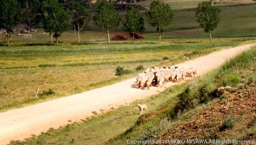 牧羊犬と羊たち (アラゴン地方・テルエル)  1507