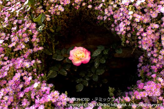 花円の中の薔薇(アンダルシア地方・アルメリア)  73