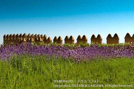 城壁周りの花(アンダルシア地方・アルメリア)  78
