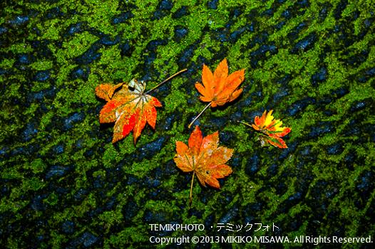 苔の上の紅葉(栃木・日光)  1313