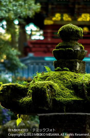 苔と石灯籠(栃木・日光)  1317