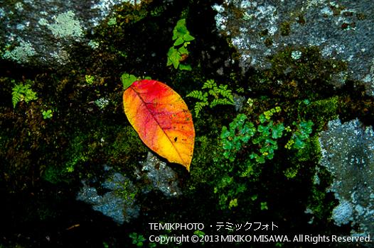 落ち葉(栃木・日光)  1330