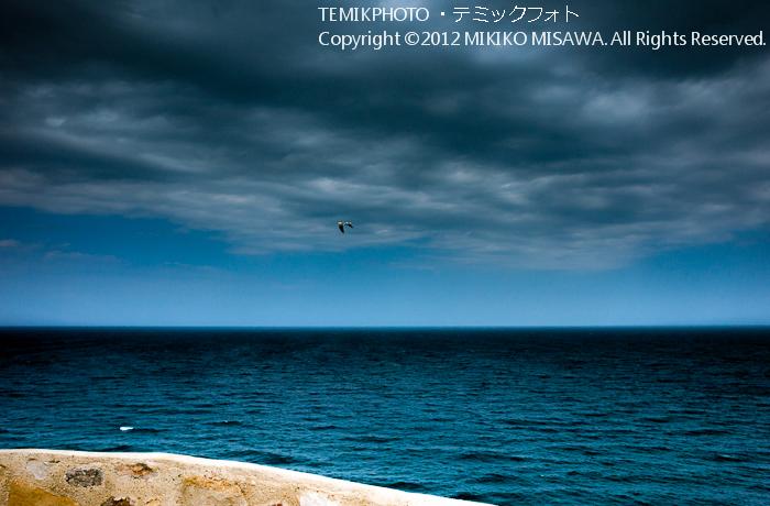 地中海と海鳥(アンダルシア地方・モハカール)  4368