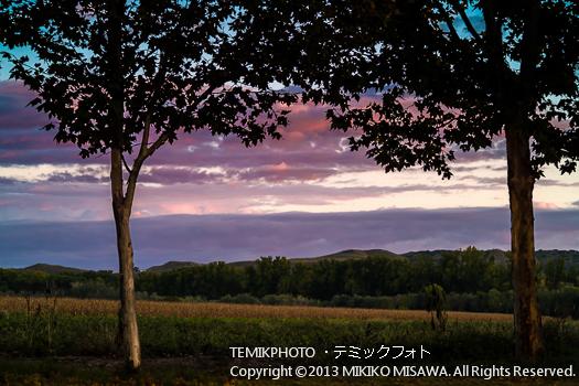 樹 (アランフェス・マドリード)  4100