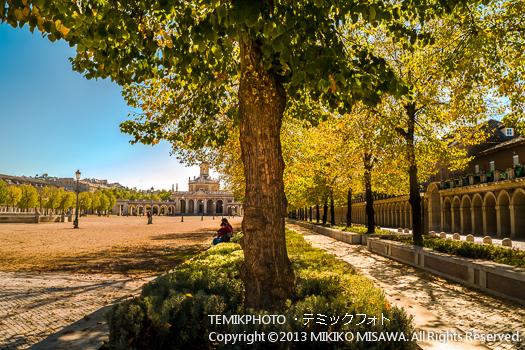 樹 (アランフェス・マドリード)  4095