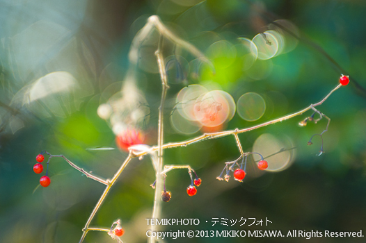 Blog-12-7