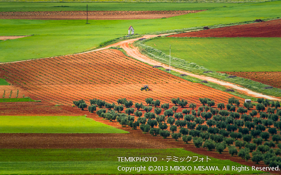 Blog-13-60 麦畑とオリーブ畑 オルガス (カスティージャ・ラ・マンチャ地方・トレド)  9778
