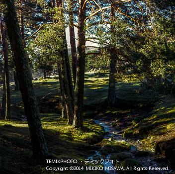 林の朝  10852