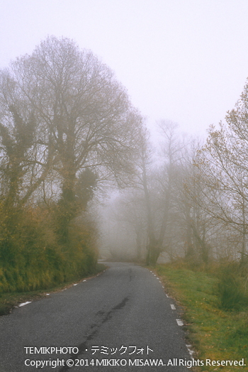 霧煙る道  10874