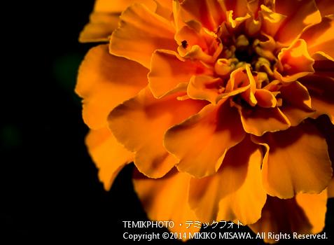 Blog-14-168  6207