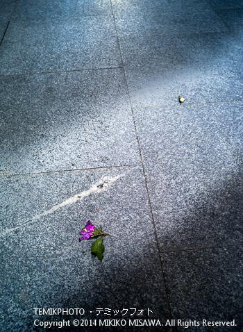 落ちていた花 : 11100