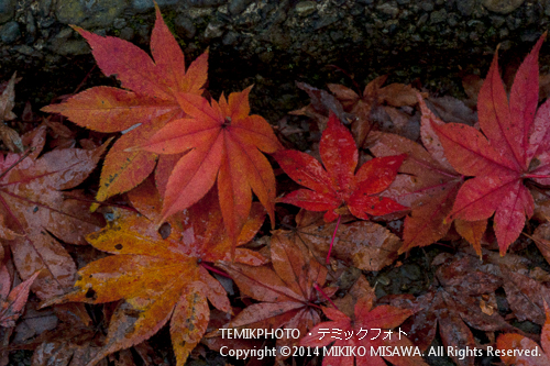 楓の葉 12750