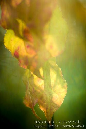 木の葉 7200