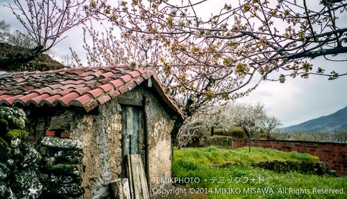 納屋と桜(ヘルテ) 8437