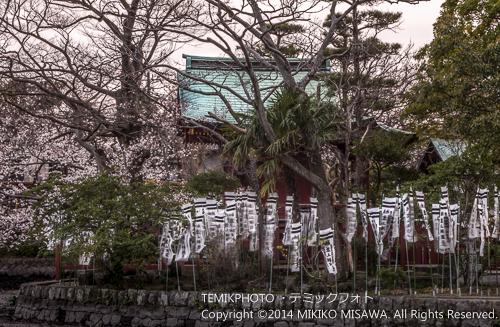 旗上弁財天社(鎌倉・鶴が丘八幡宮) 4926