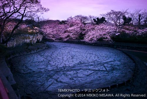 源平池(鎌倉・鶴岡八幡宮) 4936