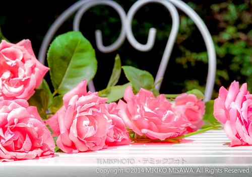 五月の薔薇(マドリード」17306