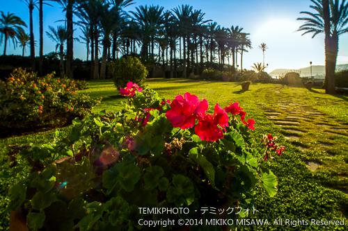 海辺の庭園 (バレンシア地方)  4057