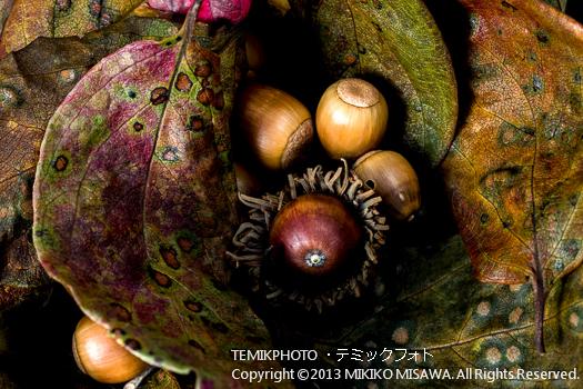 柿の葉と木の実 (東京)  6418