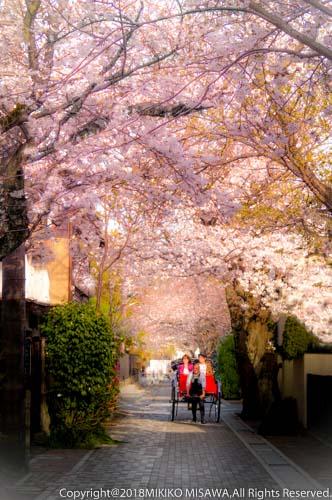 桜並木(鎌倉)  28823