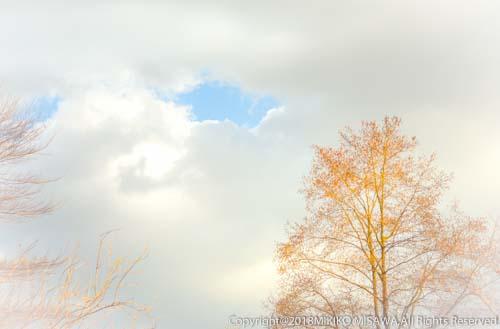冬空と木(東京)  28825