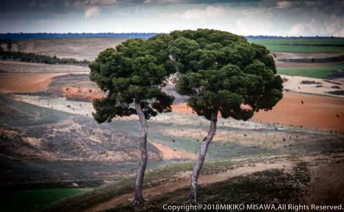 二本の木(ラ・マンチャ地方)  4173