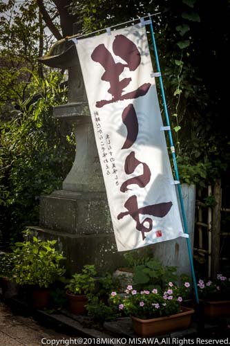 湘南・江ノ島名物ののぼり  28936