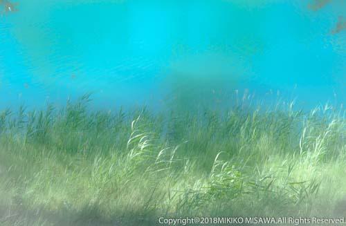 萌える(タホ川上流)  28966