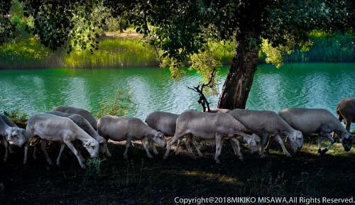 「岸辺の羊の群れ」  98 《IPA(国際写真賞) 2010年 受賞作品》